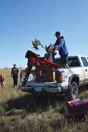 4-H members release pheasants › Sunny South News